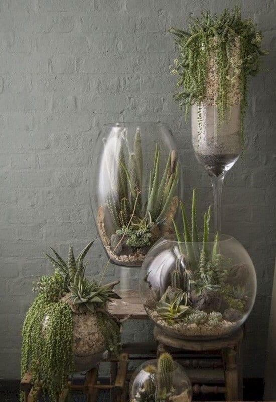 succulents-interior-decor